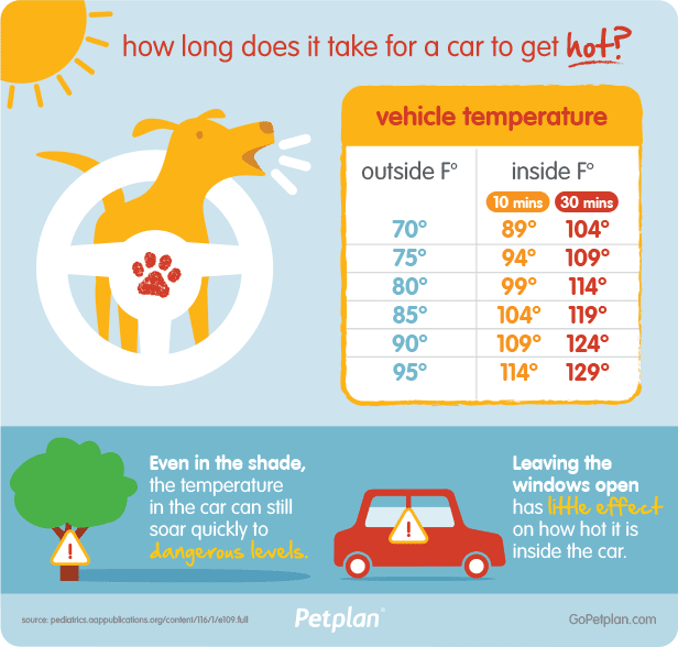 pets and hot car temperatures